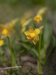 """  "" (Polotaro) Tags: flower nature pen olympus   zuiko ep1     gzuiko50mmf14"