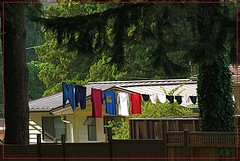 Last Fall's Laundry (ikan1711) Tags: park trees homes nature backyard colours laundry laundryline beautifultrees wonderfultrees greatcolours allnature colourfullaundry clotheslline lougheedburnabybc