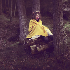Detour (Beata Rydn) Tags: trees tree forest photography blanket detour fineartphotography photographicartist beatarydn