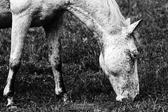 Enjoy the Silence (Marco Abud) Tags: horses horse canon sãopaulo stall cavalos stable cavalo abud cocheira sãoluizdoparaitinga rppn reservaguainumbi marcoabudfotografia marcoabud abudesignerfotografia reservaguainumbirppn