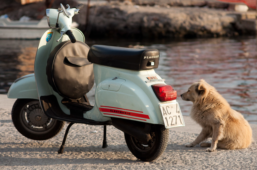 The world 39 s best photos of dog and piaggio flickr hive mind for Puntura vespa cane