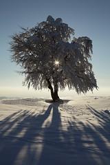 starlight (crazyhorse_mk) Tags: shadow sun snow tree germany landscape transition baden schwarzwald blackforest soundtrack schauinsland starlight badenwuerttemberg terjerypdal stohren giesshuebel