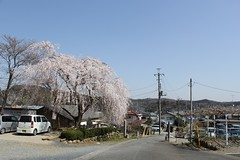 (j000ejapan) Tags: saitama plumblossom ogose