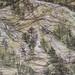 Landscape - 1998 (Detail)