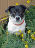 "Pet of the Week: Jesse • <a style=""font-size:0.8em;"" href=""http://www.flickr.com/photos/42888877@N06/8603007782/"" target=""_blank"">View on Flickr</a>"