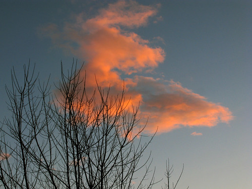 Tree & Sunset Clouds_6297-1
