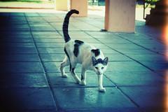 eye of the tiger (ADIDA FALLEN ANGEL) Tags: life nature animals cat outside israel nikon kitten d40