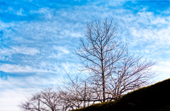 It's Been a Cold and Lonely Winter (JapanDave) Tags: blue trees sky clouds 雲 空 hdr