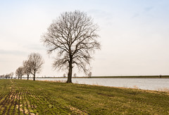 Trees (RuudMorijn) Tags: autumn trees winter tree nature water netherlands dutch field lines silhouette rural river season landscape outside countryside spring bomen europe branch view riverside natural outdoor background bare branches country seasonal perspective scenic tracks peaceful nobody scene row farmland line explore silence environment serene agriculture maas leafless picturesque idyllic kale brabant tranquil springtime manure silhouet takken noordbrabant lijnen kaal rij brabants rivier slurry grasland injected rivieroever bergse bergschemaas mestinjectie drijfmest