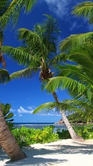Baie Lazare / Seychelles / 2013 (p_dude) Tags: seychelles africa mahé 2013 hotel kempinski resort baie lazare baielazare palms sand sea beach sun island copyrightpedrodasilvadenmark pedrodasilvaphotography pds65photo wwwsilvawebnet