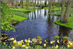 KEUKENHOF ! ! (Clic - Fany) Tags: park flowers parque trees light sky naturaleza flores color verde primavera luz nature canon spring agua plantas europa arboles blu paisaje colores amarillo holanda fiori aire jardines reflejos keukenhof tulipanes arbusto accqua garthen exquisiteflowers blinkagain bestofblinkwinners clic2011 blinksuperstars rememberthatmomentlevel1 rememberthatmomentlevel2 rememberthatmomentlevel3 fanyromano