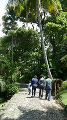 P1010981 (Mayan_princess) Tags: chiapas argovia finca resort caf coffee kaffee paraso paradise vegetacin vegetation verde green ro river spa relajacin relax forest selva orgnico autosostenible