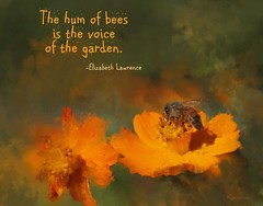The Hum of Bees (peppermcc) Tags: