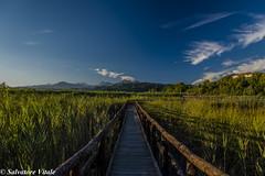 Riserva naturale del Chiarone - Oasi Massaciuccoli (Roman_77) Tags: lago massaciuccoli riserva naturale chiarone oasidimassaciuccoli massarosa lucca toscana sky blue light percorso nikon d750 roman77