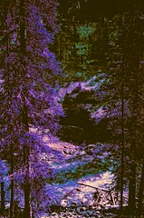 Johnston Creek (Highburnate) Tags: johnston creek canyon alberta canada canadian rockies mountains mountain rocky spruce valley summer august purple lomochrome 35mm pentax k1000 film forest life water system botanical botany biology analog nathalie weiswasser highburnate