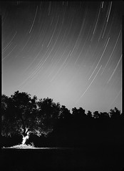 Perseids 2016 (Thodoris Tzalavras) Tags: photography astrophotography cyprus nightphotography nightscape xrayfilm trees sironarn210 cy