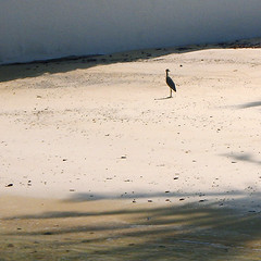 Strangely formal (jonathan charles photo) Tags: beach formal attire bird bermuda art photo jonathan charles topf25