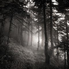 Into the forest IV (ilias varelas) Tags: forest nature ilias varelas trees woods greece mood mono monochrome mist fog atmosphere light landscape land blackandwhite bw