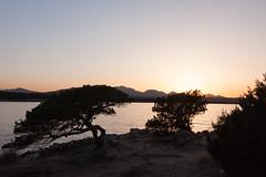 Cala Sabina (Ste.Zani) Tags: calasabina tramonto suset sea mare albero pianta sole acqua water