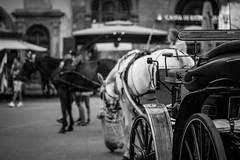 DSC_3823.jpg (JohannesKullmann) Tags: pferd horse retro old schwarz weis black white art street italy italien vintage contrast kontrast bokeh tiefenschrfe sharp