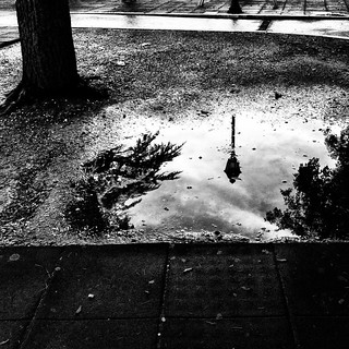 the puddle in the park