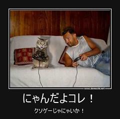 にゃんだよコレ! クソゲーじゃにゃいか! #猫 #猫語 (Demochi.Net) Tags: life cute sexy japan fun japanese motivator culture 日本 ペット 猫 demotivator 金 家族 結婚 ゲイ 女 子供 おっぱい 愛犬 政治 社会 巨乳 文化 眼鏡 教育 demotivators 経済 女性 初恋 r18 女子 カップル 子猫 女装 お笑い motivators 会社 少子化 企業 ユーモア 恋 悪い 格差 風刺 一言 デモチ 大喜利