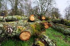 Firewood (kh1234567890) Tags: tree moss pentax logs fallen chopped firewood carrs wilmslow k7 da21 smcpda21mmf32al 21mmlimited smcpentaxda21mmf32allimited