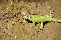 DSC_3541 (Debbie Prediger Photography) Tags: trip travel canada photography tour wildlife alberta nicaragua debbie cadogan prediger