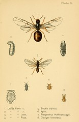 n486_w1150 (BioDivLibrary) Tags: bees ants wasps smithsonianinstitutionlibraries bhl:page=9657364 dc:identifier=httpbiodiversitylibraryorgpage9657364
