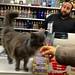 14th St Liquor Store Cat