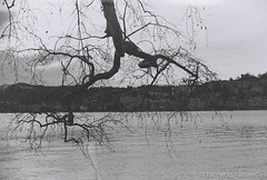 A branch on the Lake (Panda.*) Tags: wood city blackandwhite bw white lake black tree film nature water lens switzerland ticino branch minolta sony 7 delta 400 dynax alpha expired lugano ilford maxxum ceresio sal50f18