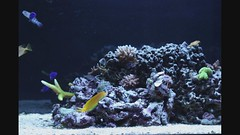 Timelapse 3 (CleanCletus) Tags: fish aquarium timelapse fishtank urchin