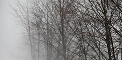 299 - the fog (Ata Foto Grup) Tags: trees winter mountain snow tree fog forest turkey march branch branches sade rip türkiye foggy dal minimal snowing sis minimalist mart pus sakin sisli dağ ağaç soğuk kış orman dallar izmit kocaeli ağaçlar maşukiye kartepe