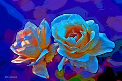 The Sand Dream (Nira Dabush) Tags: roses rose photography sand photographer digitalpainting     fineartist textiledesigner  berkovitz   niradabush   computercdigital