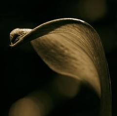 Hoja 2 (marianobs) Tags: bw macro leaves contraluz hojas shadows bokeh flash bn desenfoque contraste minimalismo d4 105mm macrobokeh nikkor105vr marb nikonfx