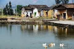 Village  (Melinda ^..^) Tags: china door houses light people heritage home window water rural countryside duck pond village path live traditional culture mel shade guangdong poultry melinda folks   villagehouses  lianping chanmelmel