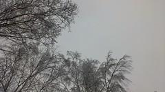 (szczym) Tags: trip winter bike poland polska zima rower bzzz pszczoy wyprawa mid robaki flickrandroidapp:filter=none jedziemynamiodzie wyprawawobroniepszcz rolnikuszanujpszczoy