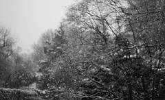 Snow in late March? (AnaCooke) Tags: blackandwhite bw white snow canon eos 50mm f18 600d