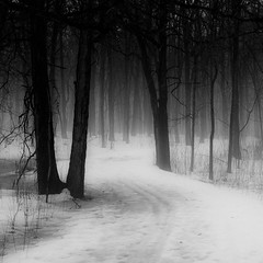 Forest Path in Winter Fog (noahbw) Tags: trees winter blackandwhite bw mist snow monochrome misty fog forest square landscape blackwhite woods nikon foggy hellernaturecenter d5000 noahbw bestevercompetitiongroup creativephotocafe