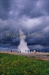 40054360 (wolfgangkaehler) Tags: flowers flower tourism iceland energy europe european tourist tourists reykjavik steam geyser volcanic erupt thermal icelandic geysers goldencircle thermalspring geysirhotspringarea