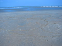 Geometry on the beach III : trying an Apollonian Gasket (fdecomite) Tags: beach circle geometry packing gasket apollonian