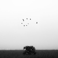 Birds (bmahesh) Tags: blackandwhite india tree field birds canon square canon5d chennai mahesh tamilnadu cwc thiruvallur canonef100400mm canoneos5dmarkii chennaiweekendclickers maheshphotography bmahesh wwwmaheshbcom cwc249