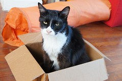 "Hermanito. In A Box • <a style=""font-size:0.8em;"" href=""http://www.flickr.com/photos/94329335@N00/8619374053/"" target=""_blank"">View on Flickr</a>"
