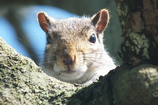 Close up shot of a squirrel