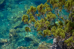 Tyrrhenian Sea - San Nicola Arcella (fede_gen88) Tags: blue trees sea italy water coast nikon mediterranean italia clear calabria tyrrhenian sannicolaarcella d5100