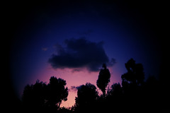 the beauty of things that constantly change (ADIDA FALLEN ANGEL) Tags: life trees sky nature beauty night outside israel nikon natural horizon d40