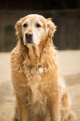 dog (One shot Thomas) Tags: wild dog photoshop walking sussex nikon brighton farm 11 east elements nikkor 55200mm d3100