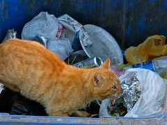 "gato basura • <a style=""font-size:0.8em;"" href=""http://www.flickr.com/photos/92957341@N07/8657054316/"" target=""_blank"">View on Flickr</a>"