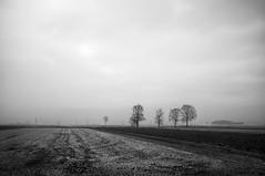 ... la smorfia degli eucalipti ... (UBU ♛) Tags: blancoynegro blackwhite noiretblanc blues dreams biancoenero blupolvere ©ubu unamusicaintesta landscapeinblues bluubu luciombreepiccolicristalli