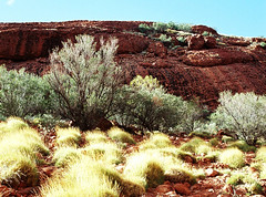 Landscape_NT_Kata_Tjuta_F1030014_4_D (renrut01) Tags: grass rock colours australia bushes katatjuta northernterritory